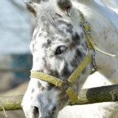 Riabilitazione-Equestre