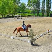avviamento-equitazione